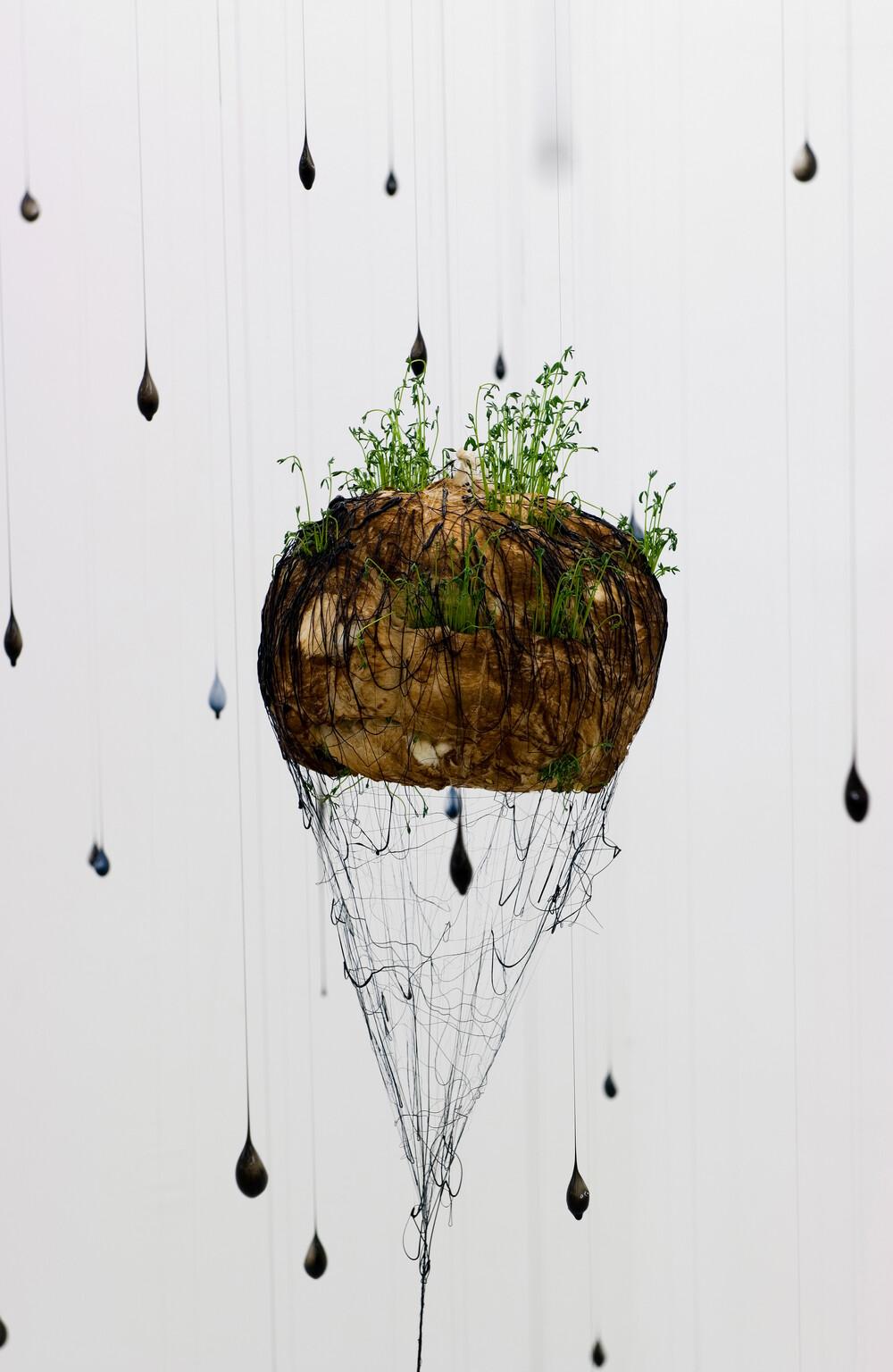 Spirogyres - © Galerie des Galeries
